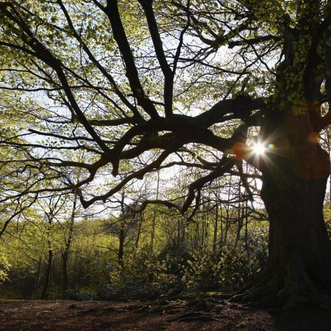 a huge tree trunk