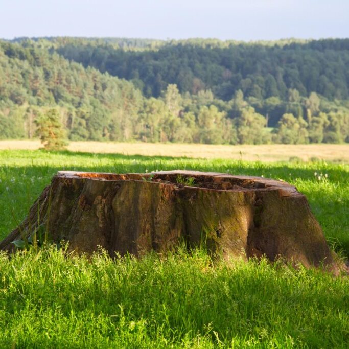 a tree stump with hole in the middle
