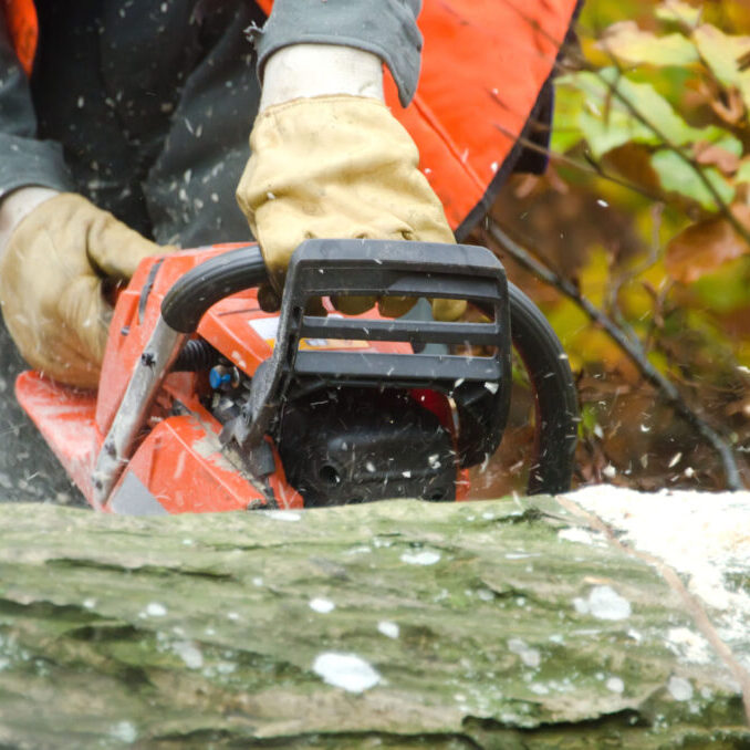 someone using chainsaw to cut the tree log