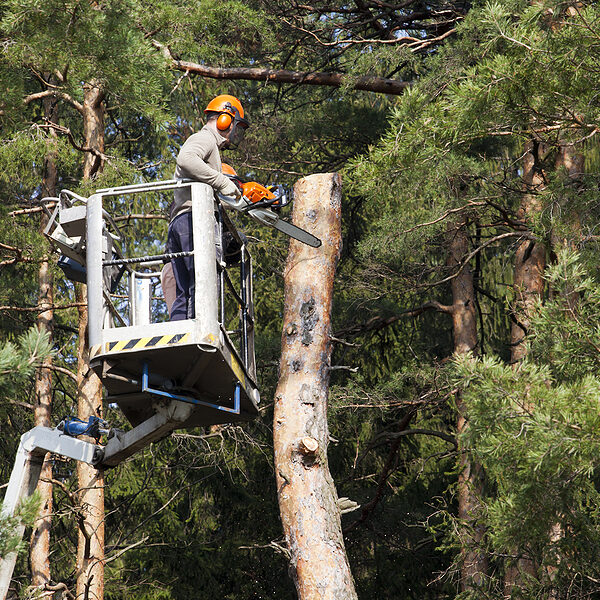 two workers with a chainsaw trimming the tree branches on the high hydraulic mobile platform and cut down a tree.